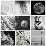 Challenge d'Octobre : Noir & blanc