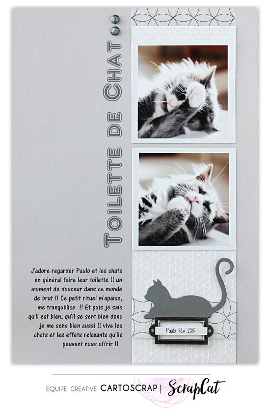 page toilette de chat1